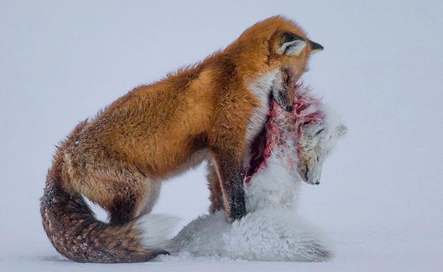 Tales of two foxes - Tin vắn ngày 20/10: Sigma lại làm loạn! - 50mm Vietnam