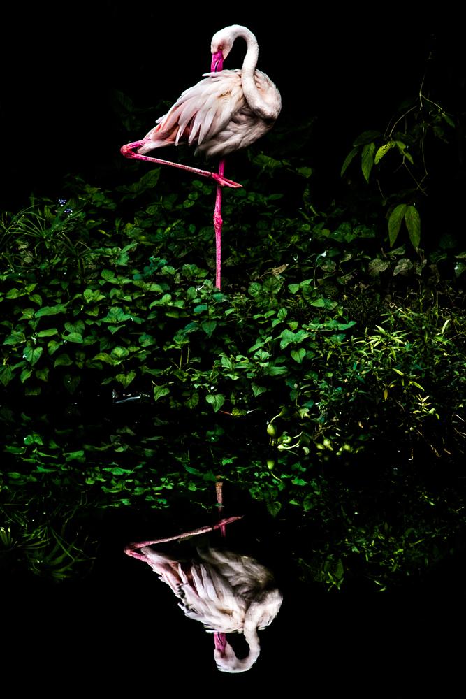 Lặng người với những kiệt tác của Sony's 2016 World Photography | 50mm Vietnam