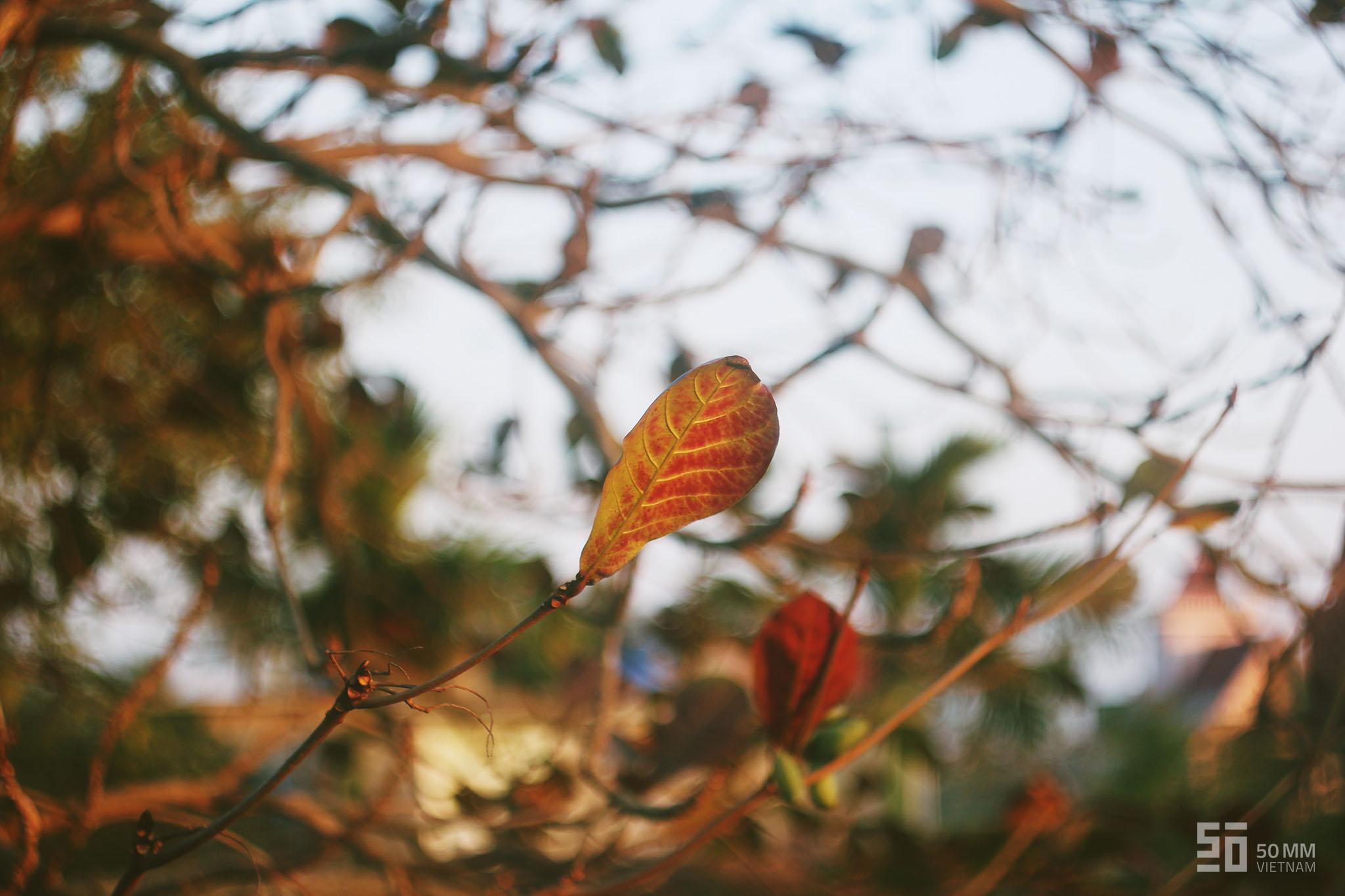 Màu sắc và Đen-trắng | 50mm Vietnam