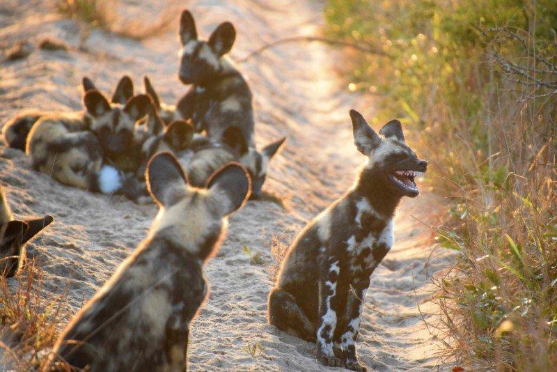 Top 20 ảnh động vật hoang dã hài hước 2017 | 50mm Vietnam